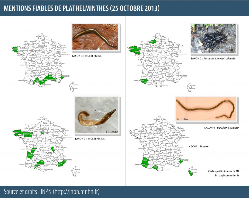 Plathelminthes invasifs terrestres en France - carte au 25-10-2013