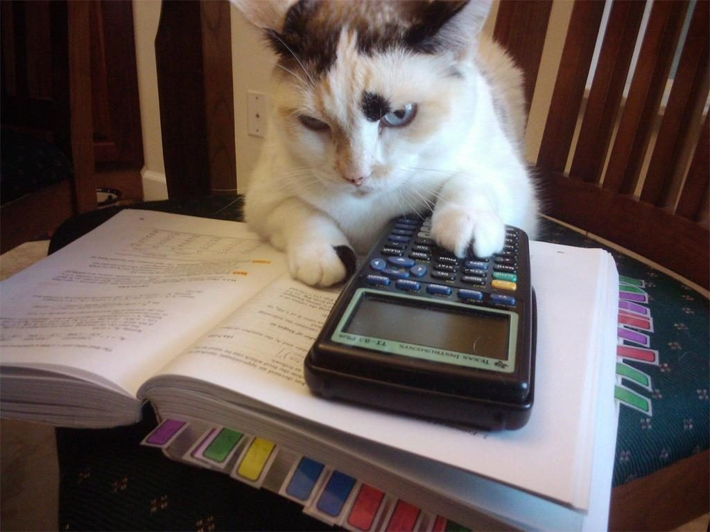 chat calculatrice