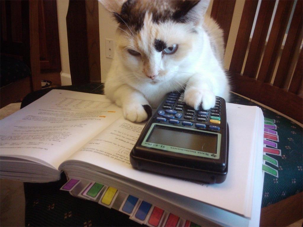chat calculatrice